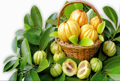 Garcinia Fruit Basket